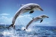 Застреляни делфини в Мексиканския залив
