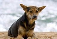 Улично куче спасява от хипотермия и смърт 3-годишно момиченце