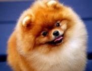 Усмихват ли се кучетата?