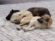 Варненци на протест срещу забраната за храненето на бездомни животни