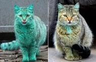 Вижте какво се случи с боядисаната котка от варненските улици