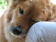 Кучетата реагират на човешките емоции