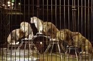 Забраниха със закон цирковете с дресирани животни в Гърция