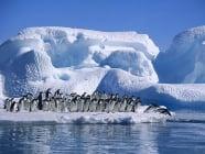150 000 пингвини са загинали на Антарктида