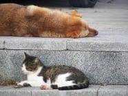 За или Против храненето на бездомни животни