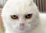 Запознайте се с Чарли, котето със силен дух, останало без нос и уши