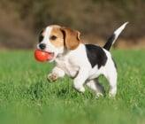 Защо играта е толкова важна за кученцата ?