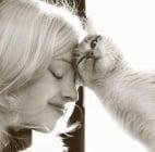 Защо котката си търка главата във Вас?