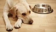 Защо кучето отказва да си яде храната?
