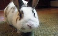 Защо не бива да пречим на зайците да ядат изпражненията си?