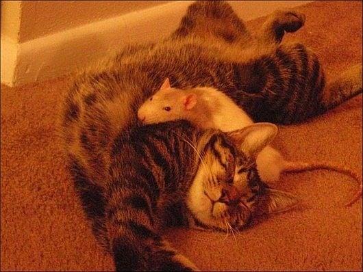 Невероятно приятелство между котка и мишка в истинския смисъл на думата