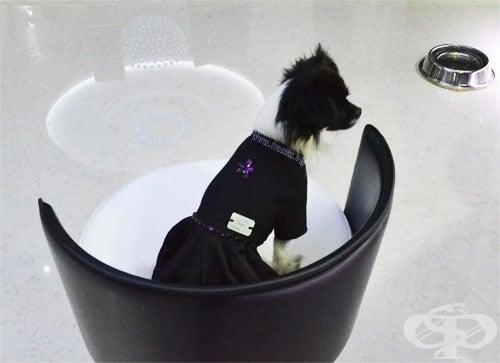 ЧИКИТА ЛУКСОЗНА РОКЛЯ ЗА КУЧЕ LITTLE BLACK DRESS