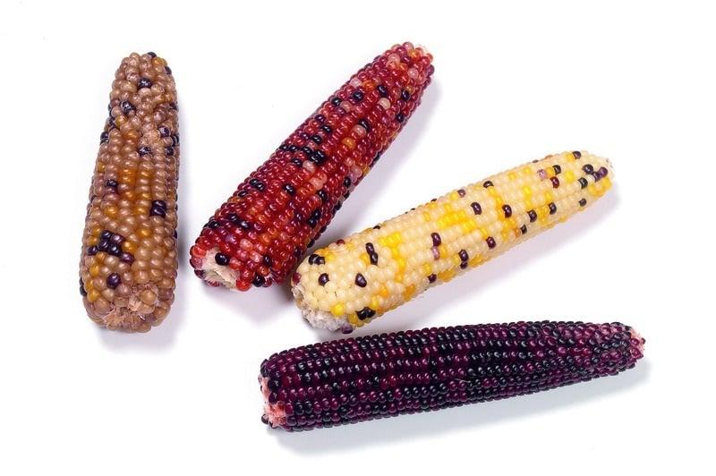 Мини царевици за гризачи 170гр.