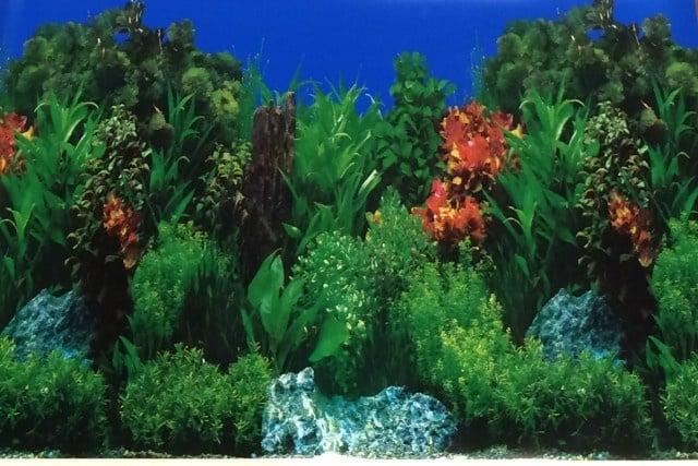Aqua Nova Плакат едностранен; високи растения Н-30см; Н-50см; Н - 60см