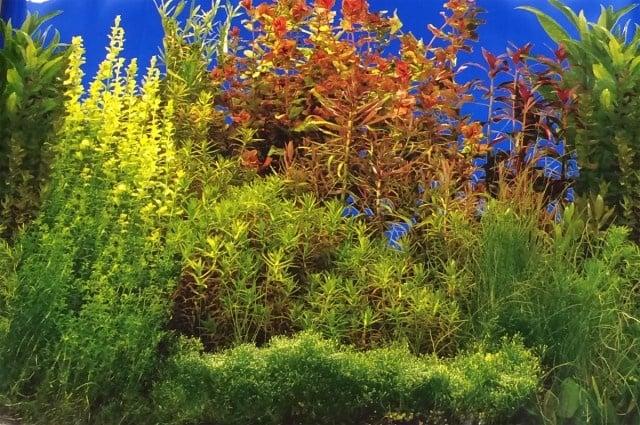 Aqua Nova Плакат едностранен растения Н-30см; Н-50см; Н-60см