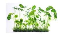 Изкуствено растение - 16см.