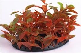 Изкуствено растение за декорация - 9см.