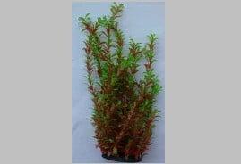 Изкуствено растение - 52см.