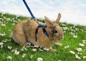 Нагръдник + повод за зайчета