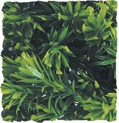 Терариумно растение Zoo-Med - борнео звезда