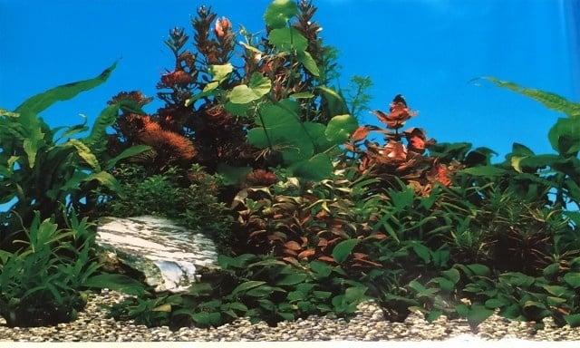 Aqua Nova Плакат едностранен Н-30см;Н-50см;Н-60см красиви растения