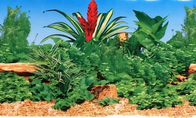 Aqua Nova Плакат едностранен Н-30см;Н-50см;Н-60см червен камък и пясък