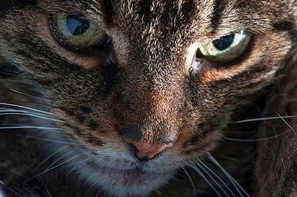 3 любопитни факта за котката ви, които може би не знаете