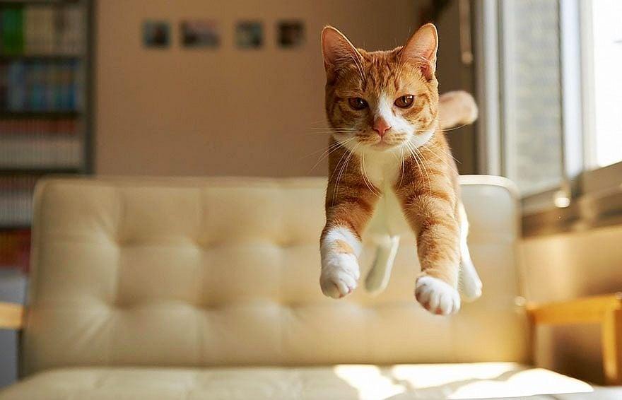 5 лесни начина да направите котката си по - щастлива