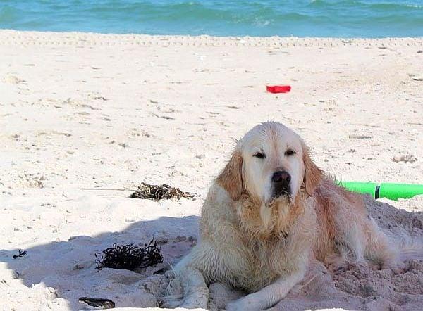 6 начина да опазим кучето си на плажа през лятото