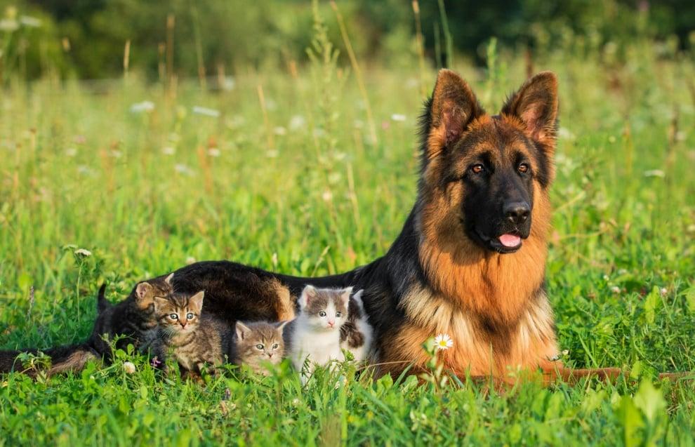 Снимки на животни, които ни зареждат с любов и радост