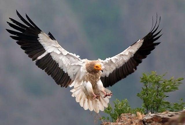 БДЗП обявява фотоконкурс по случай Международния ден на птиците