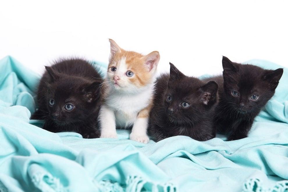 Броят на ваксинираните котки в България нараства
