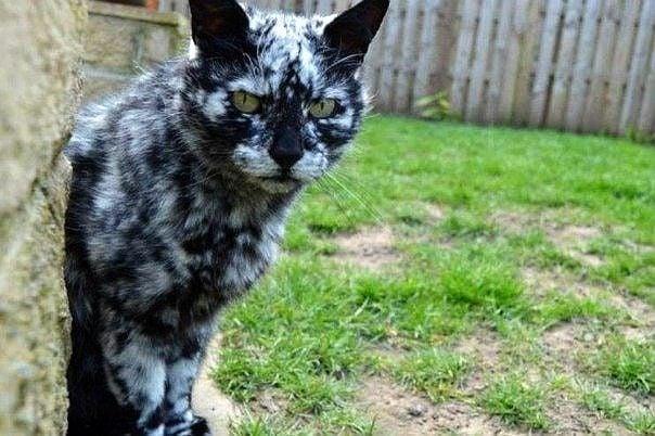 Чисто черна котка придобива уникална мраморна окраска