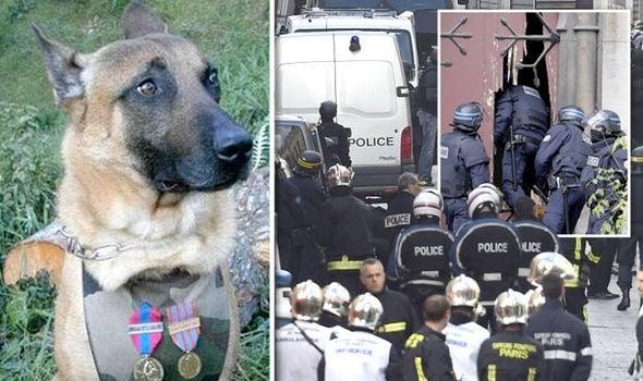 Полицейското куче Дизел се превърна в герой, загивайки при залавянето на терористите в Париж