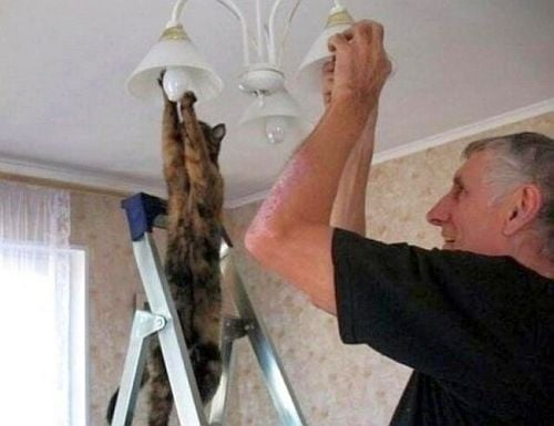 Домашни любимци като най - добрите помощници в домакинската работа