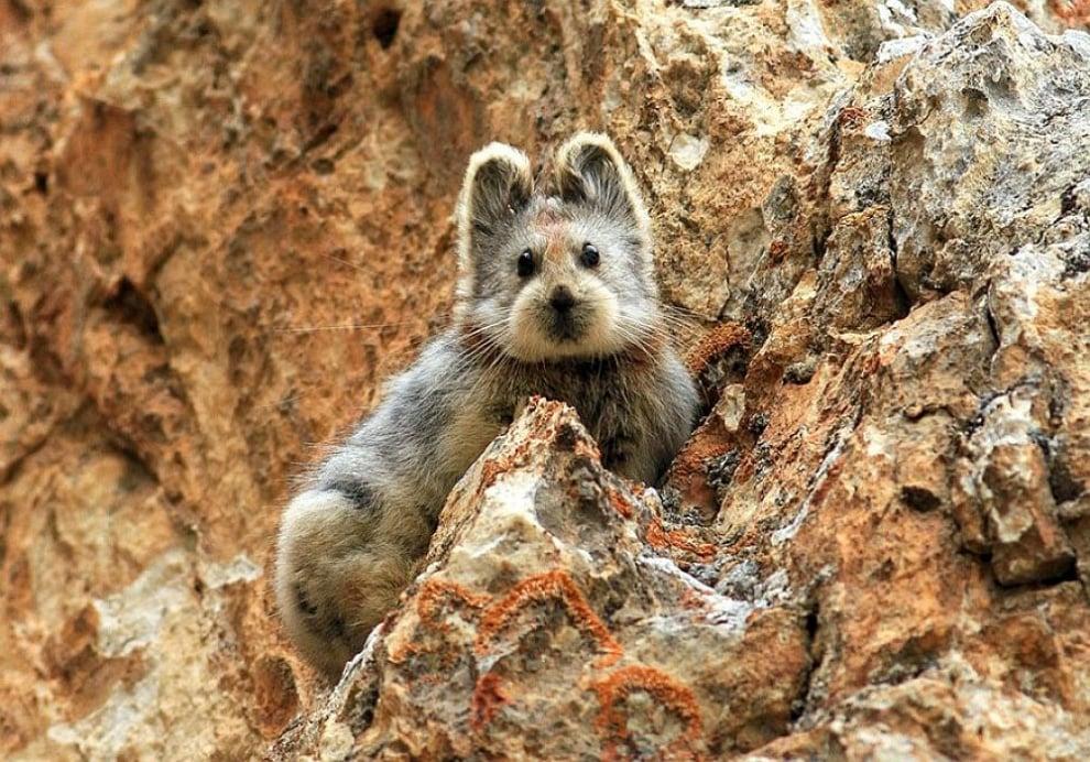 Едно от най - редките създания в света е забелязано за първи път от 20 години насам