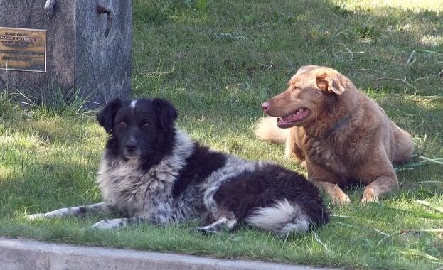 Бургас овладя проблема с безстопанствените кучета
