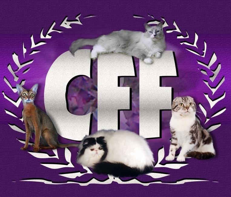 Федерация на любителите на котки