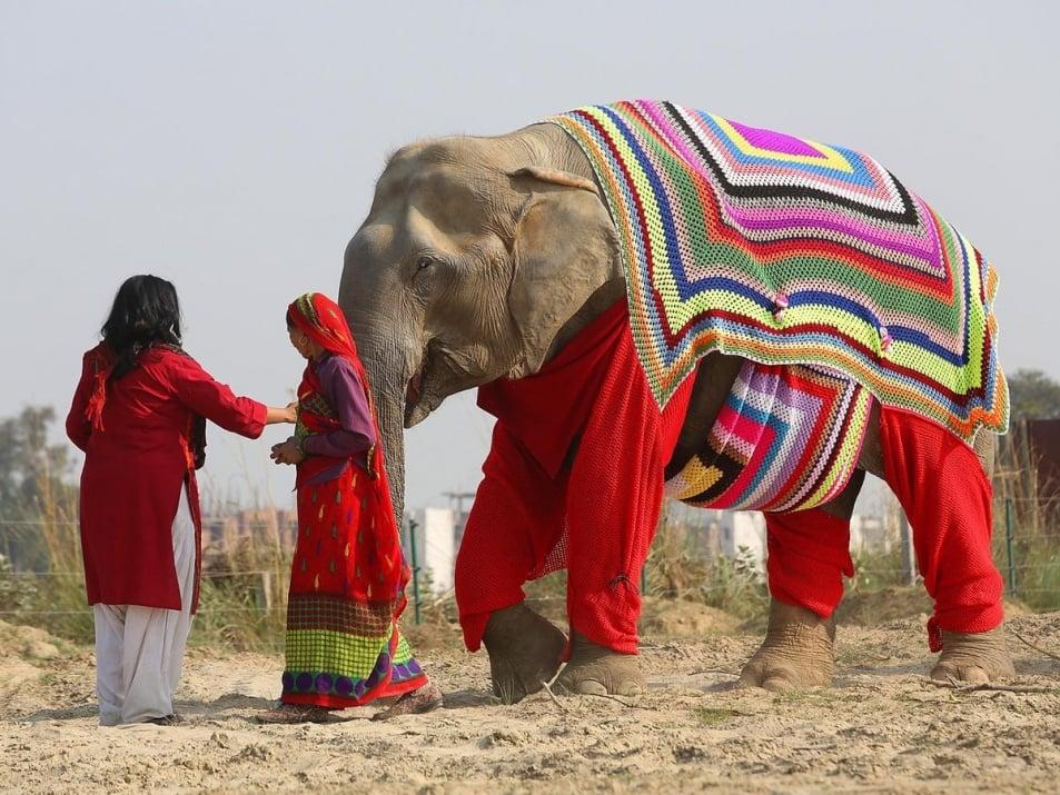 Селяни в Индия изплетоха жилетки за слонове в приют, за да ги защитят от ниските температури