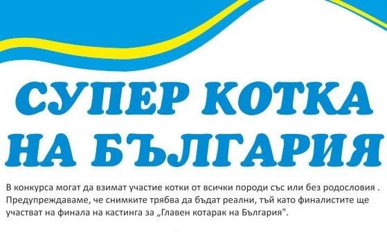 Избира се супер котка на България - участвайте в конкурса!
