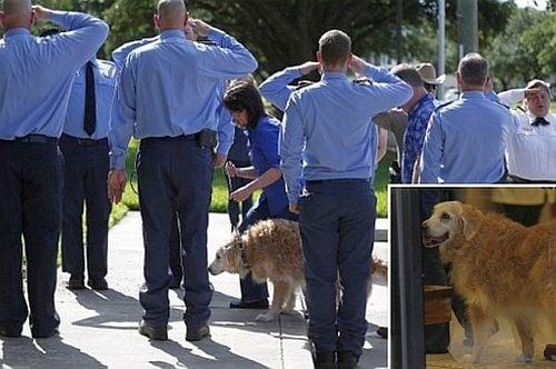 Изпратиха с военен салют последното оцеляло куче спасител от 11 септември