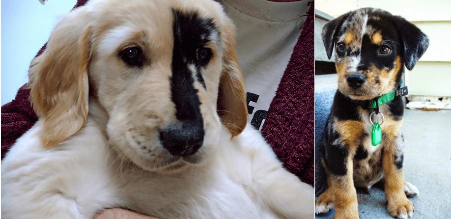 10 кучета и котки с невероятни шарки