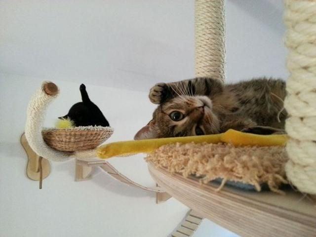 Как да превърнем малкото си жилище в рай за котки?