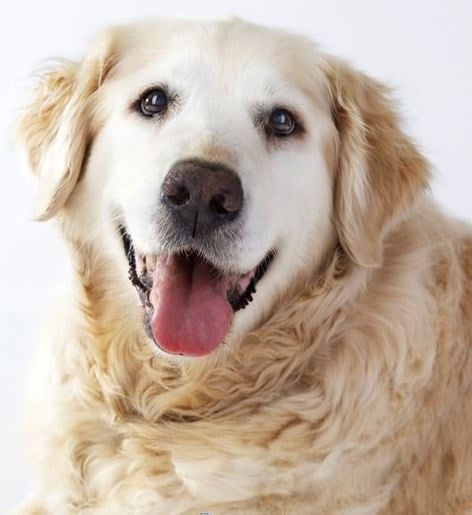 Какво трябва да знаете за възрастните кучета?