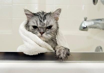 Как да изкъпем котката?