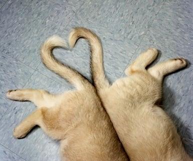 Какво показва опашката на кучето?