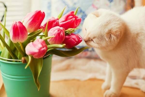 Кои цветя са безопасни и кои токсични за домашните любимци?