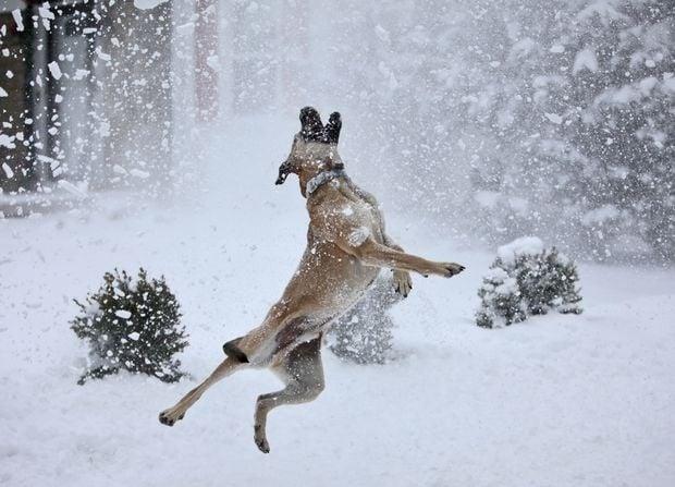 Кои са породите кучета, обожаващи студеното време?