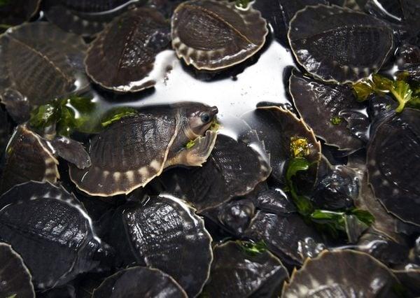 Стотици костенурки са спасени при опит за контрабандна доставка