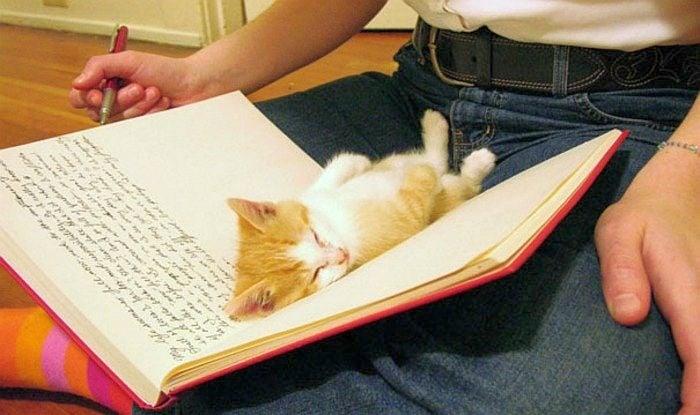 Котенца, които обичат да бъдат на необичайни места